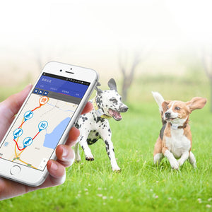 TDUnique PET COLLAR GPS