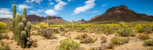 Desert Panoramic - 02135 - Wall Murals Printing - wall art