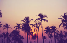 Sunset and Palm Trees - 02137 - Wall Murals Printing - wall art