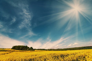 Beautiful Sunny Field - 02141 - Wall Murals Printing - wall art