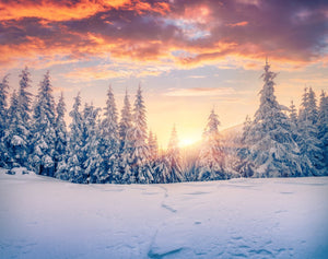 Sunset in the Forest with Snow  - 02176 - Wall Murals Printing - wall art