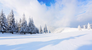 Beautiful Snow Landscape  - 02188 - Wall Murals Printing - wall art