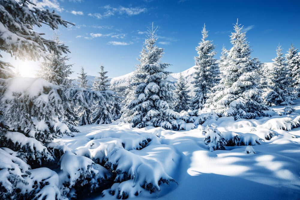 Snow in the Forest  - 02203 - Wall Murals Printing - wall art