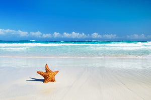 Star on the Beach  - 02218 - Wall Murals Printing - wall art