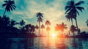 Sunset & Palm Trees  - 02227 - Wall Murals Printing - wall art