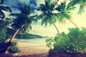 Beach Palm Trees - 0238 - Wall Murals Printing - wall art