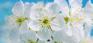 White Flowers - 023 - Wall Murals Printing - wall art