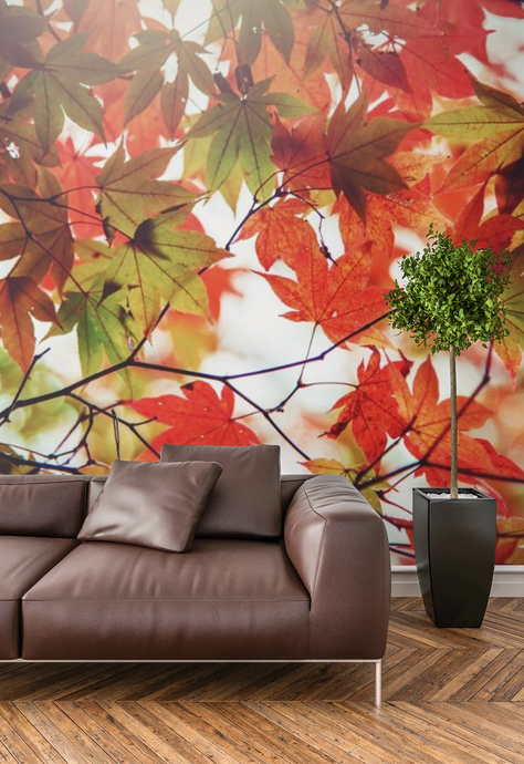 Autumn  - 02239 - Wall Murals Printing - wall art