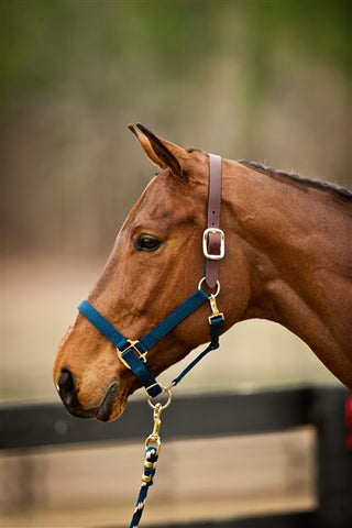 Nylon Break-a-way Halter w/Breakaway Crown