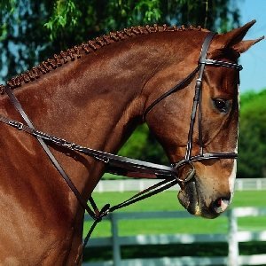 Imperial German Martingale Set