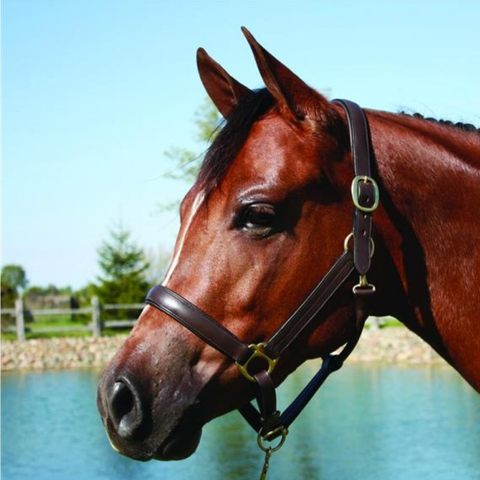 HDR Advantage Padded Leather Halter