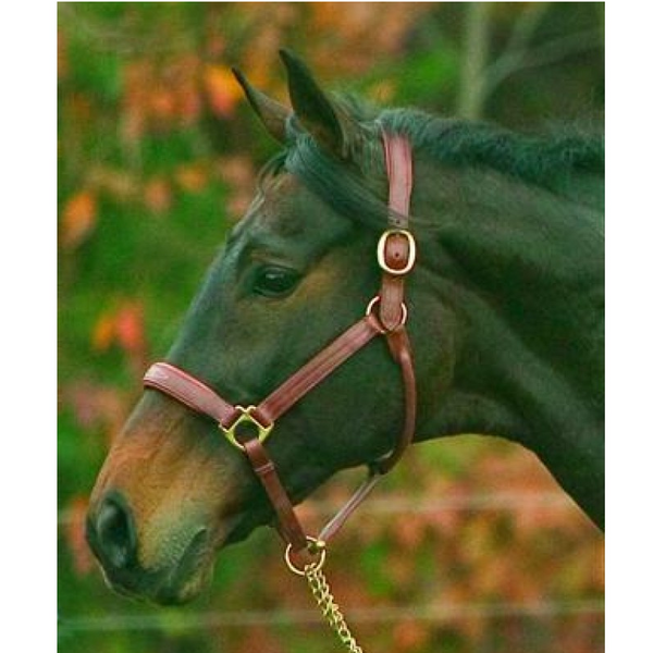HDR Fancy Stitched Padded Halter