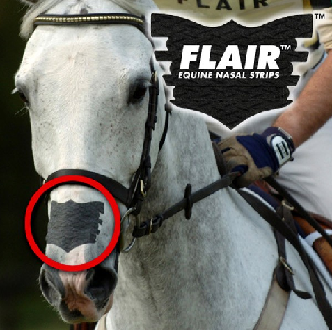 FLAIR Equine nasal strips (single)