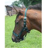 Cushion Web Foal Halter