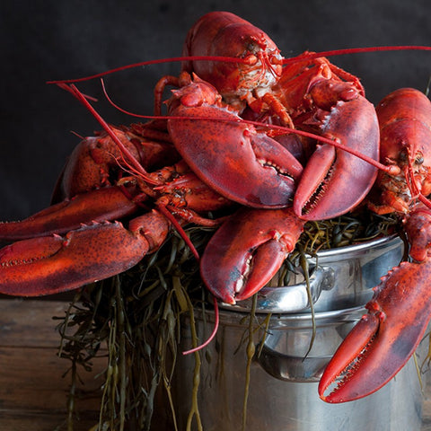 Live Maine Lobsters (2-Pack)