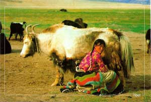 Tibetan Farm GIrl Post Card #10