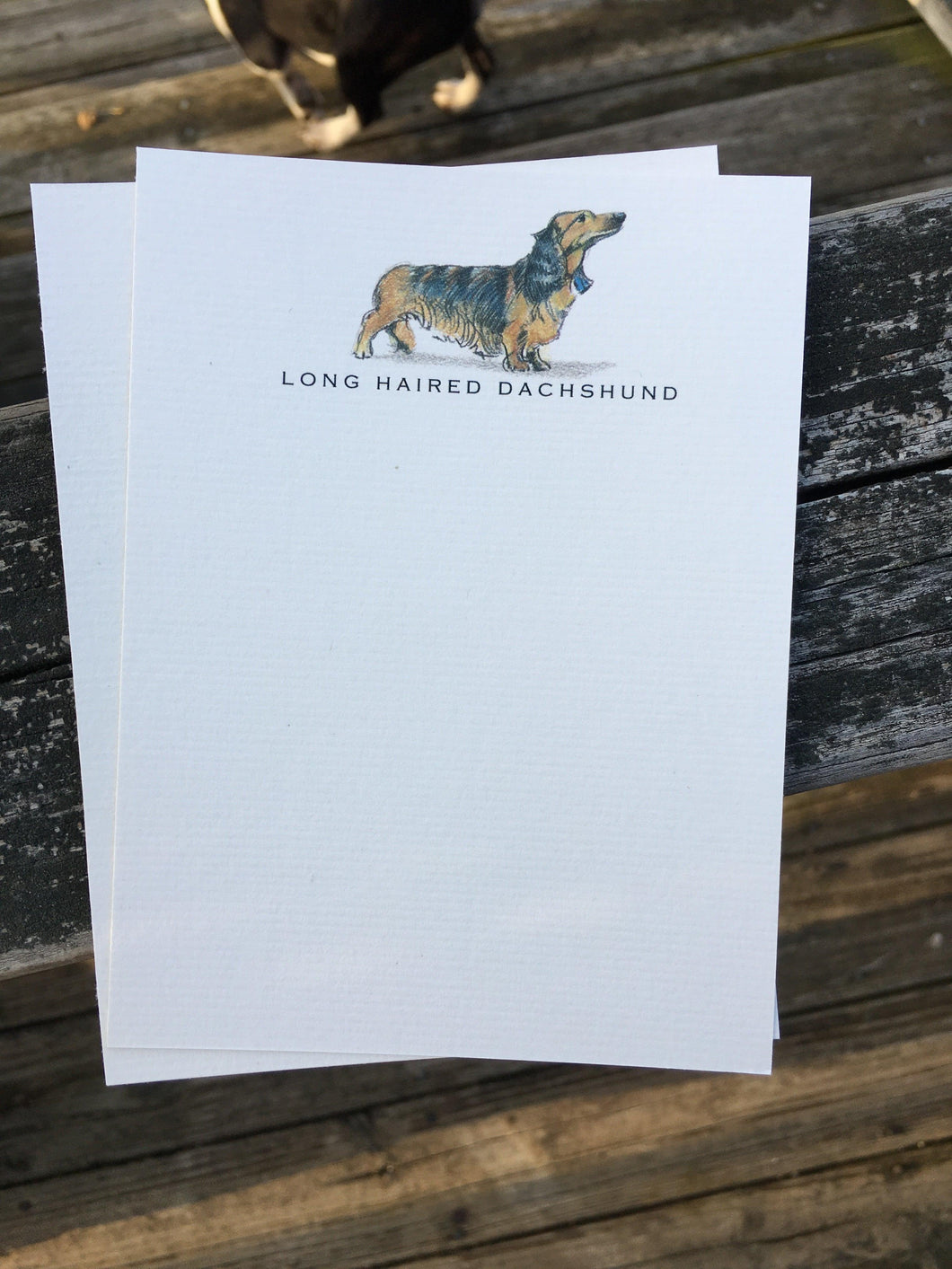 Buy elegant Long Haired Dachshund Notecards for $11.00 by Rachel Canada Artist