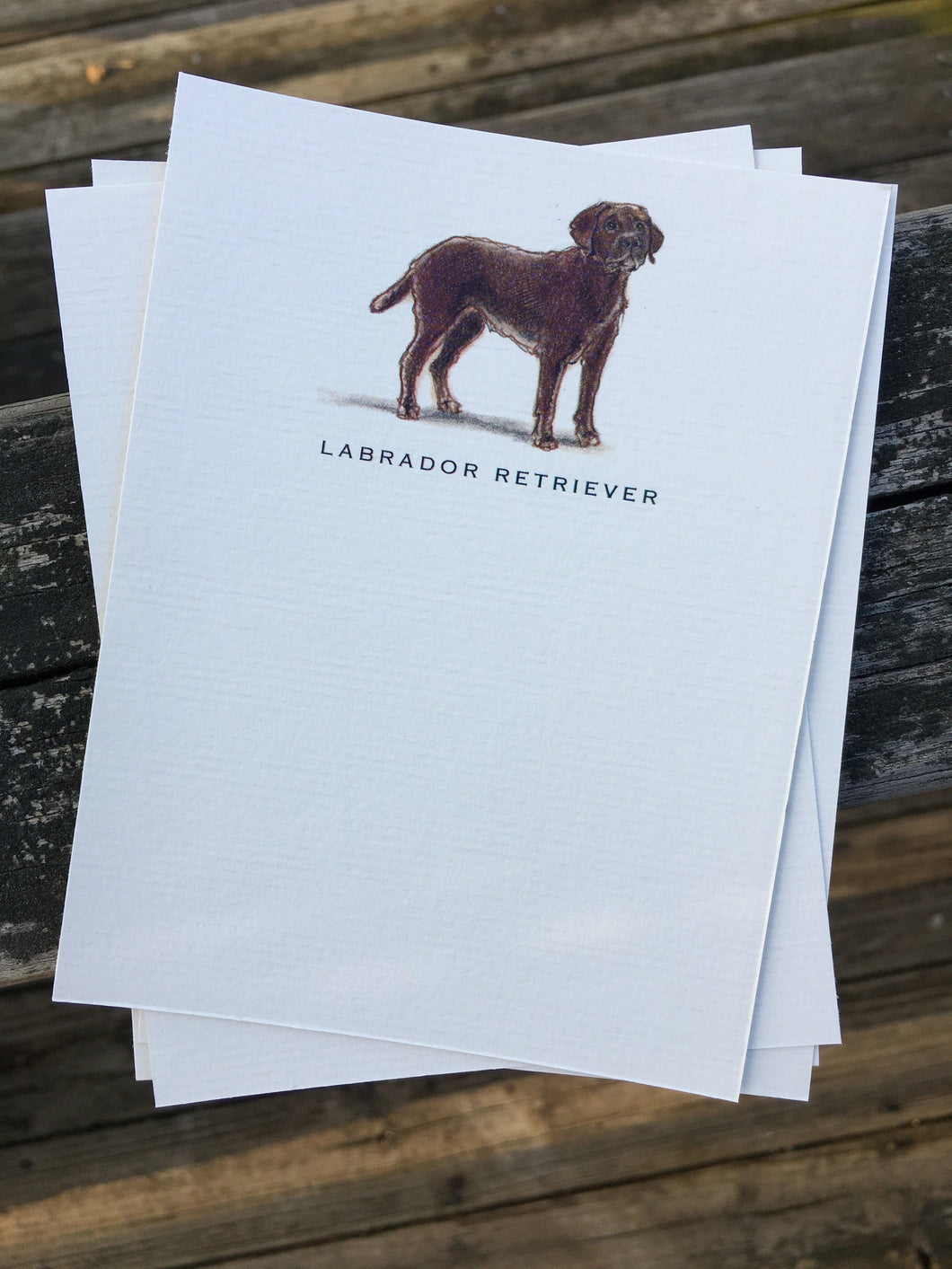 Buy elegant Chocolate Labrador Retriever Notecards for $11.00 by Rachel Canada Artist