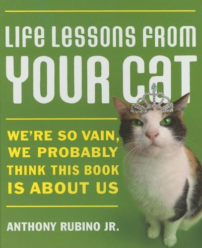 Life Lessons From Your Cat