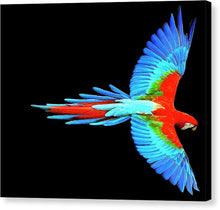 Colorful Parrot In Flight - Canvas Print