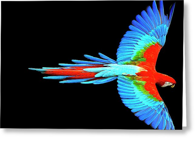 Colorful Parrot In Flight - Greeting Card