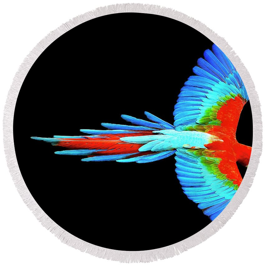 Colorful Parrot In Flight - Round Beach Towel