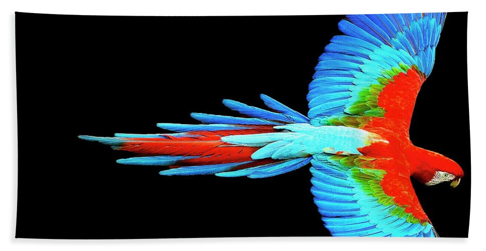 Colorful Parrot In Flight - Bath Towel