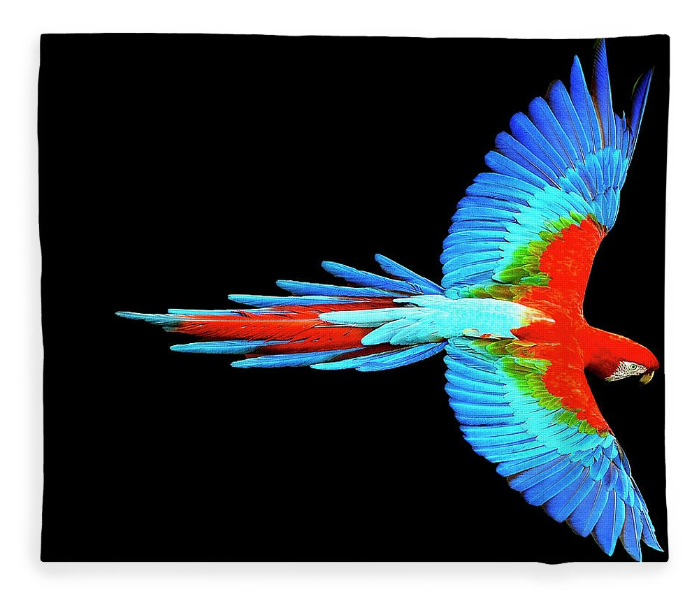 Colorful Parrot In Flight - Blanket