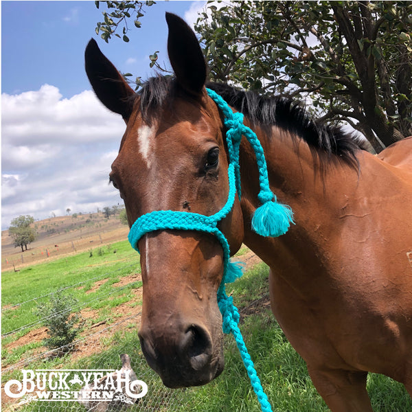 Teal Woven nylon mule tape halter with removable lead