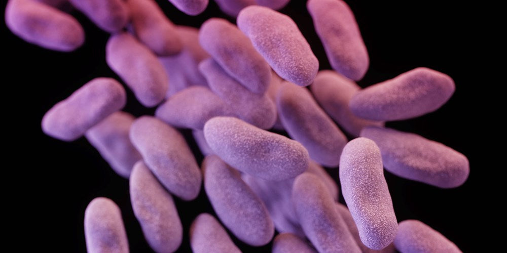 "CDC offers new call to arms on ""Nightmare Bacteria"""