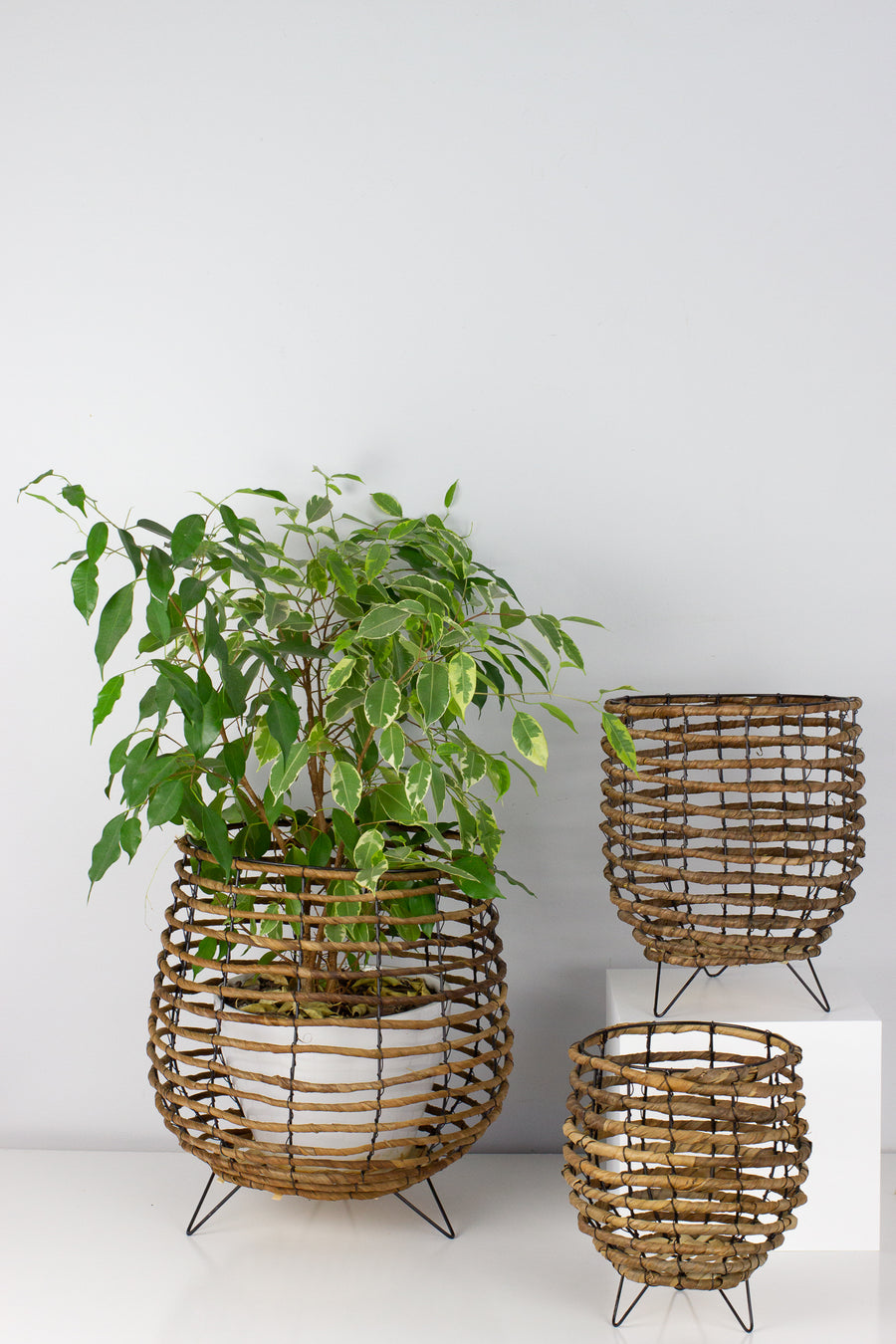 Wire Basket Planter - Medium