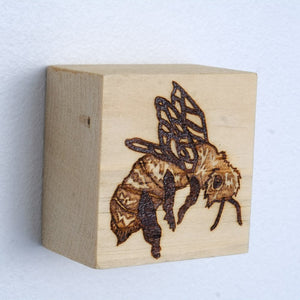 Erin Shadoff - Honey Bee