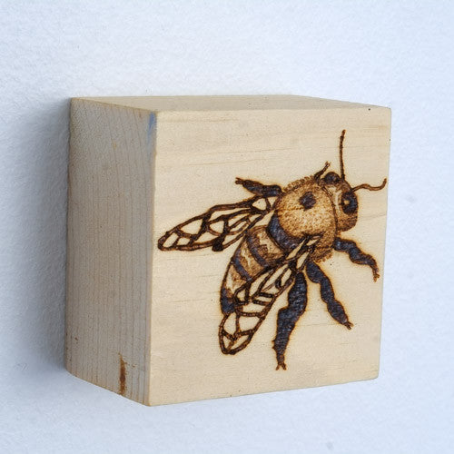 Erin Shadoff - Carpenter Bee