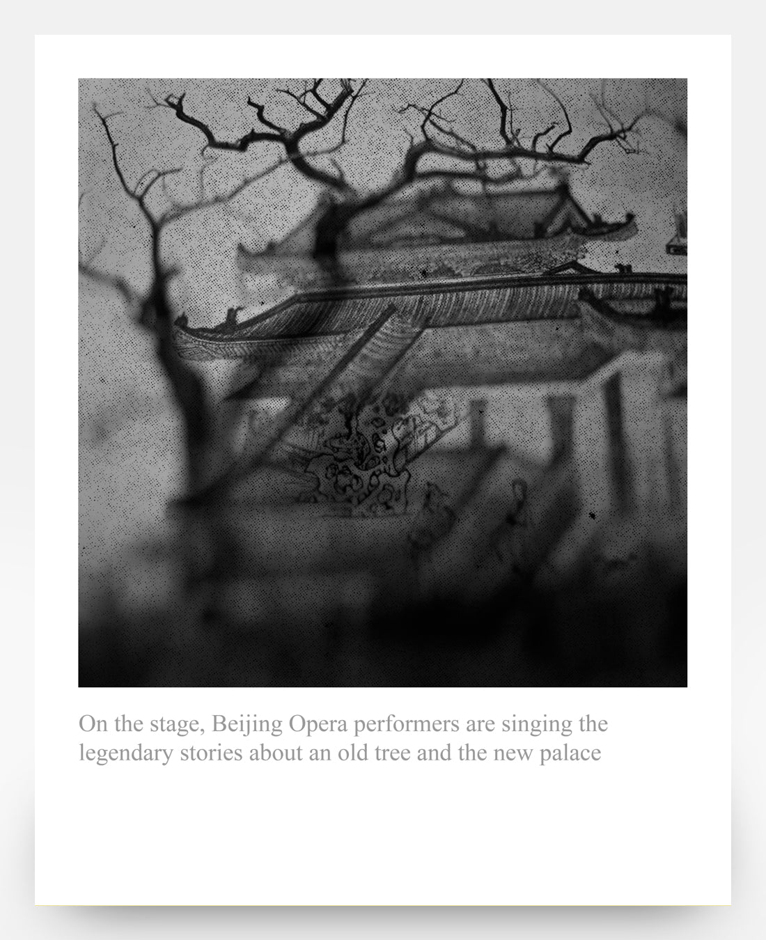 (stories about an old tree and the new palace)