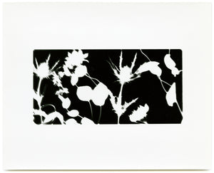 (Holly Lee) Photogram #4