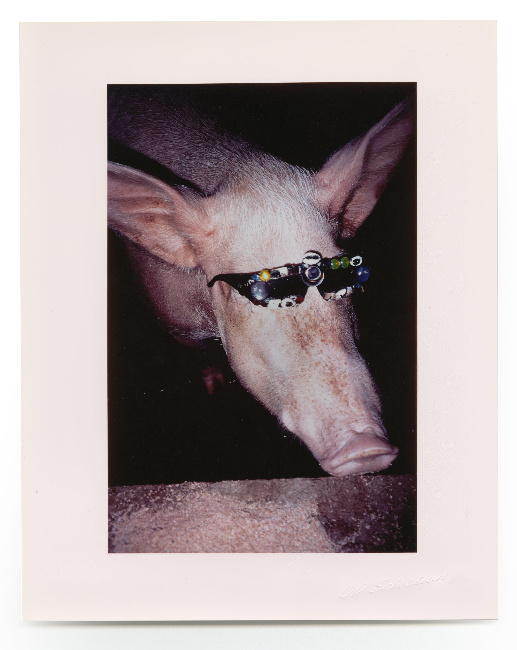 Froggy Sunglasses Project (Pig)