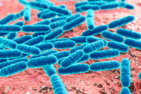 What is the Human Microbiome and How Do We Keep it Healthy?