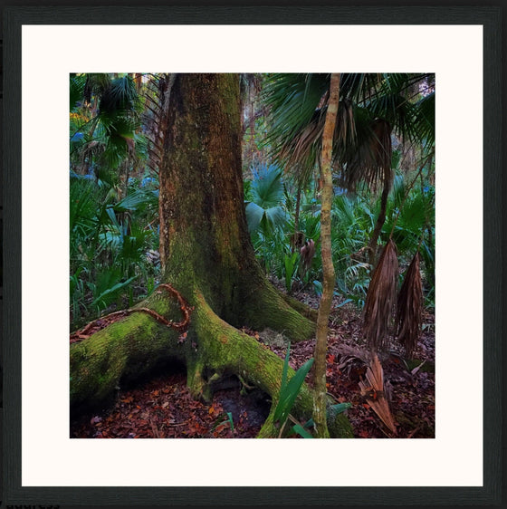 "Mark Richardson - ""Algae Tree"" Framed photo"