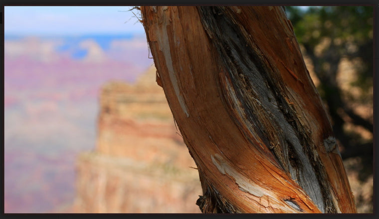 "Mark Richardson - ""Grand Canyon Tree Trunk"" Photograph"