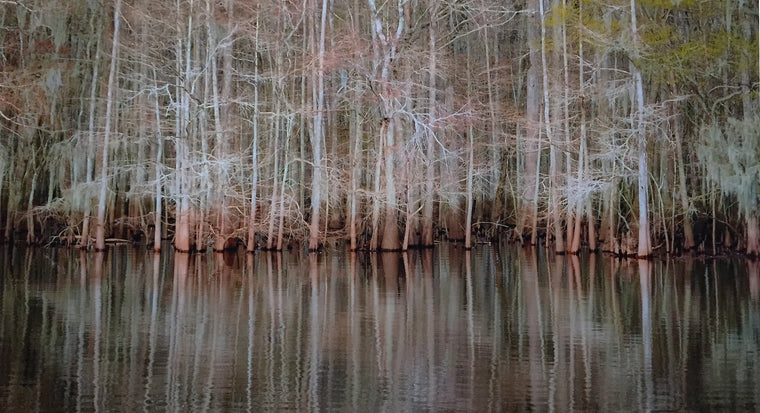 "Mark Richardson - ""Manatee Springs"" Photo Print under Matte Acrylic"