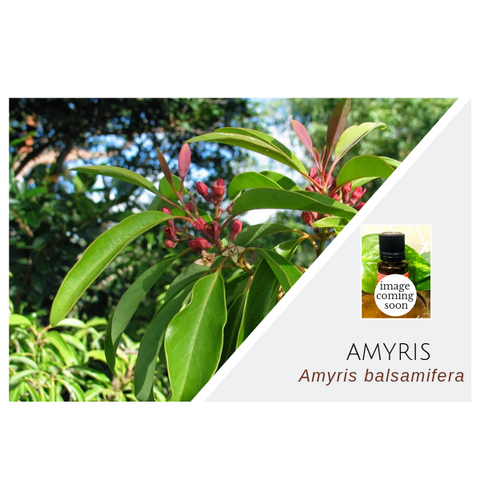 Amyris - Wholesale