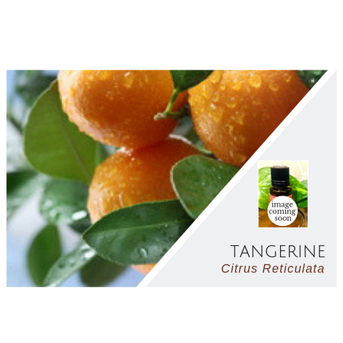 Tangerine - Wholesale