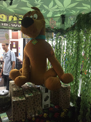 K-days Shell Shock Edmonton Scooby Doo Mystery Boxes