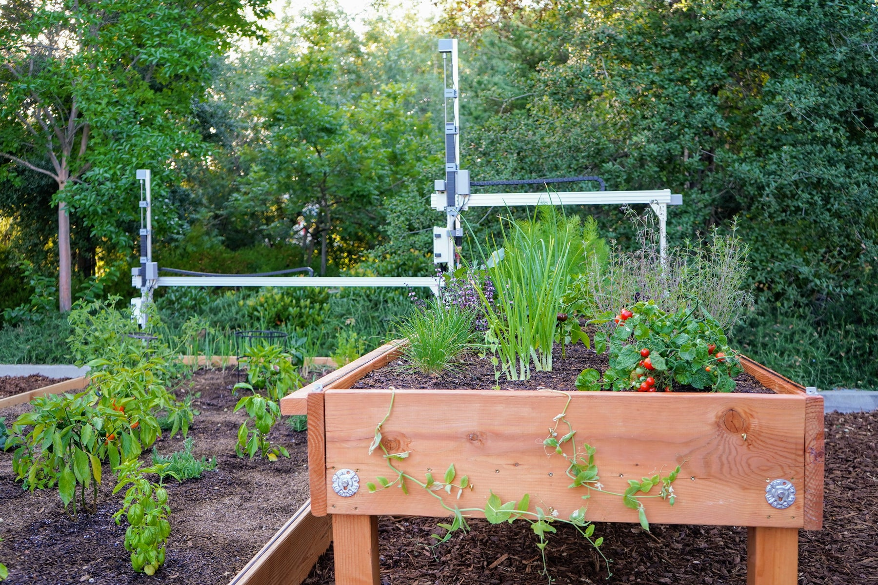 How much food can FarmBot grow?