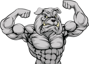 Buff Muscle Gray Bulldog Vinyl Decal Sticker