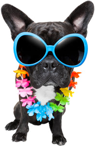 Hawaiian Black French Bulldog Puppy with Sunglasses Vinyl Decal Sticker