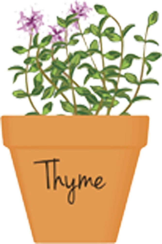 Pretty Potted Herb Cartoon Art - Thyme Vinyl Decal Sticker