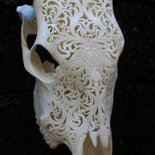 Bali ethnic real cow skull carving wall decor W002