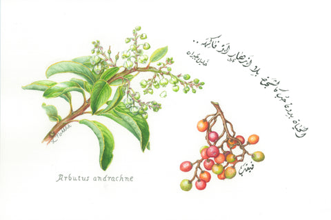 A Botanical Painting Artist from Palestine: Lois Nakhleh
