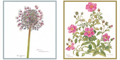 Botanical Illustrations Prints